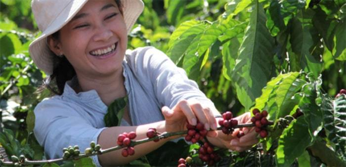 women coffee production