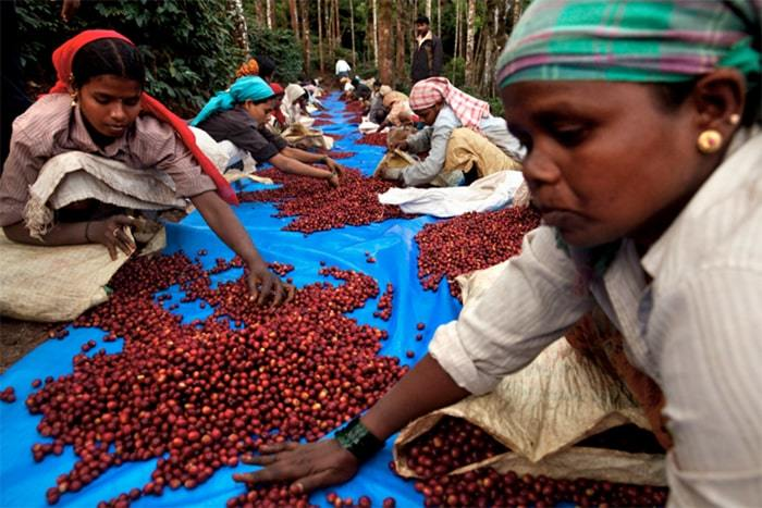 use coffee to reduce famine